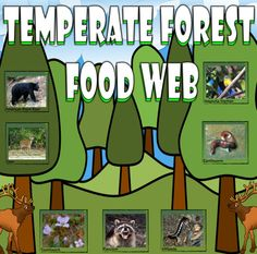 Bring the Temperate Forest to your classroom with this card sort activity. The activity utilizes 32 real-life pictures that will help students create a food chain and/or web.