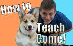 How to teach Come! The FASTEST Way to Teach YOUR DOG to COME WHEN CALLED ANYWHERE Zak George's Dog Training rEvolution