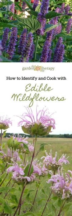 Edible Gardening How to Identify and Cook with Edible Wildflowers - Grow edible wildflowers and learn to cook with them! Use them in teas, salads, or even just on their own. Lots of recipes and ideas for edible wildflowers. Herb Garden, Vegetable Garden, Garden Plants, Garden Tools, Garden Ideas, Organic Gardening, Gardening Tips, Flower Gardening, Edible Wild Plants