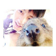 My memory with #quokka  また会いに行きたいな . . #quokkaselfie #selfie #rottnestisland  #wa #australia #perth #beach #island #aussie #instatravel #instalike #instapic #instapassport #japanese #backpacker #wildlife #animal #vscocam #traveltheworld #like4like #旅 #世界一周 #オーストラリア#セルカ #옷스타그램 #셀스타그램 #셀카 #여행스타그램 by ug_ft.uk http://ift.tt/1L5GqLp