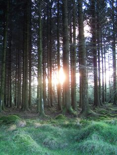 This image was taken by Marc during a walk in the woods near Fernworthy Reservoir up on Dartmoor UK #farmhouse #Etsy #rustic #reclaimed  #wood #interiors #UK #handmade #design #country #sunset #glade #Devon #Fernworthy #traditional #forest  #woodland to find out more go to www.facebook.com/woodbyname?ref=hl