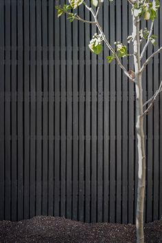 Black timber lattice is often used by B.E Architecture for fences around internal terraces Timber Battens, Timber Screens, Timber Fencing, Fence Design, Garden Design, Detail Architecture, Garden Gates And Fencing, Black Fence, Black Garden Fence