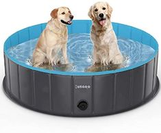 Outdoor Swimming Pool, Swimming Pools, Big Dogs, Large Dogs, Small Dogs, Baby Pool, Kid Pool, Extra Large Dog House