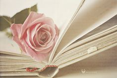 book, rose, and pink image Beautiful Images, Beautiful Flowers, Beautiful Stories, Rose Violette, Book Flowers, Rose Background, Pastel Roses, Soft Autumn, Rose Cottage