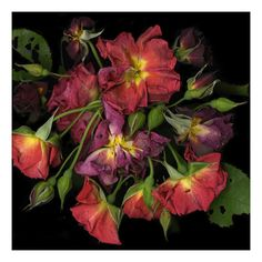 Robert Creamer Photography scanned botany