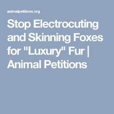 "Stop Electrocuting and Skinning Foxes for ""Luxury"" Fur 