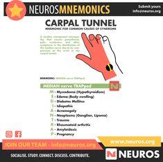 Radiology Student, Median Nerve, Medical Mnemonics, Medical Terminology, Carpal Tunnel, Nursing Notes, Nclex, Med School, Social Networks