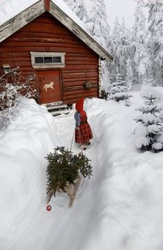 Per Breiehagen photography, Winter Magic (I don't think this is in Canada. Looks like a very Norwegian girl in a very Norwegian sweater photographed by a very Norwegian photographer. in a very Norwegian landscape. Christmas Scenes, Noel Christmas, Country Christmas, Winter Christmas, All Things Christmas, Cabin Christmas, Simple Christmas, Thanksgiving Holiday, Christmas Birthday