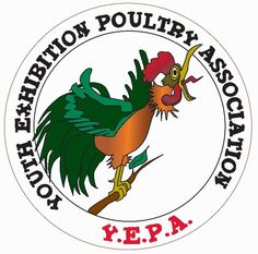 33 Best 4-H Poultry Project images in 2016 | Poultry, 4 h