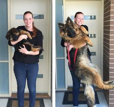 Couple Documents Rapid 8-Month Growth of Their Adorable German Shepherd Puppy - My Modern Met