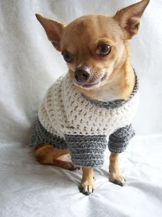 21 dogs in handmade dog sweaters - Cute, cuter, cutest from etsy ...