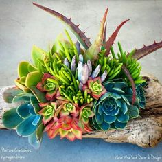 Succulents in a driftwood container