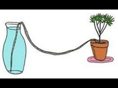 This Will Water Your Plants While on Vacation Works Like A Charm - YouTube