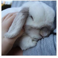 this bunny is too cute!