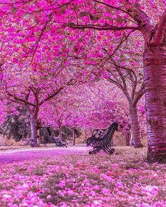 Greenwich Park is turning on 🌺 Which one is your favourite view, 1 to 😍 London, United Kingdom. Photos by Beautiful World, Beautiful Gardens, Beautiful Places, Beautiful London, Wonderful Places, Beautiful Nature Wallpaper, Beautiful Landscapes, Landscape Photography, Nature Photography