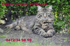 Verloren ....Perdu... in Ninove op 29 mei 2014 heeft er iemand deze poes gezien??? Luistert naar de naam Figaro is een kater van 2 jaar oud je kan steeds contact opnemen op het nummer 0472/349859.