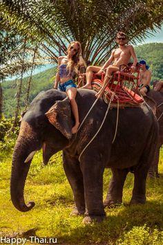 Катание на слонах среди пальмовых плантаций. Слонопотамия - экскурсия Happy Thai