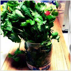 How to store cilantro, plus 10 great cilantro recipes