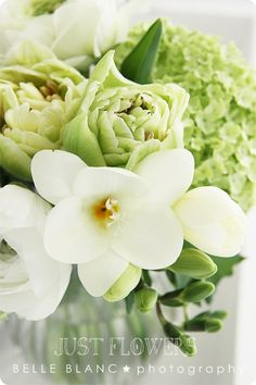 BELLE BLANC: Just Flowers ◦●◦ ჱ ܓ ჱ ᴀ ρᴇᴀcᴇғυʟ ρᴀʀᴀᴅısᴇ ჱ ܓ ჱ ✿⊱╮ ♡ ❊ ** Buona giornata ** ❊ ~ ❤✿❤ ♫ ♥ X ღɱɧღ ❤ ~ Su 22nd Feb 2015