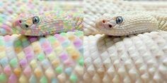 Rainbow snake. Not really rainbow-y; the real image is on the right.