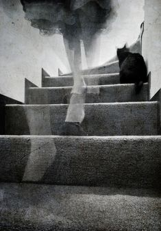 "Find us in the stairwells - where cats whisper to shadows - and sing the songs of the invisible. - In their carving cries - the visage of our essence - finds our mirrored sky. ―""Le Don de la J Muse"", Pepé Le Pew  •  Photo: Laura Melis"