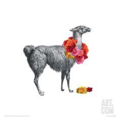 Llama Giclee Print by John Murphy at Art.com