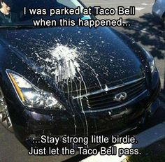 one thing is for sure, there is a bird around here who ate some taco bell