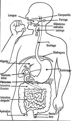 9 Mejores Imágenes De Anatomia Learning Science Classroom Y