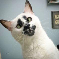 Omg! Kitty cuteness in so many ways! Luv!