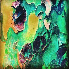 Tree Bark Lake Linganore Maryland. Photo by Odette Katz