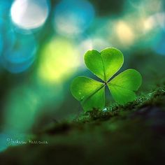 bokeh is so beautiful Three Leaf Clover, Clover Green, Erin Go Bragh, Irish Blessing, Happy St Patricks Day, Shades Of Green, Beautiful World, Beautiful Pictures, Photos