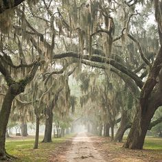 Love places with Live Oaks and Spanish Moss