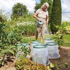 Pflanzglocke Sunny Online Kaufen Bei Gartner Potschke Pflanzen Gartenbedarf Und Zierpflanzen