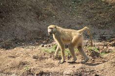 Kangaroo, Animals, National Forest, Africa, Guys, Baby Bjorn, Animales, Animaux, Animal