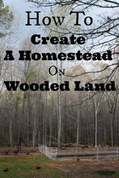 Dos and Don'ts of Choosing Heavily Wooded Land for Your Homestead