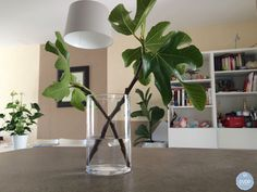 Urban Jungle Bloggers: Plants & Glass by @dvdpblog