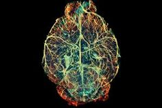 """What's this mouse brain thinking? 20 billion """"magnetoelectric"""" nanoparticles """"talk"""" to the brain using electric fields they produce when stimulated by an external magnetic field (2015-06-08 