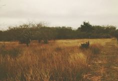 Dove Hunting South TX