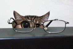 peek-a-boo... I see you