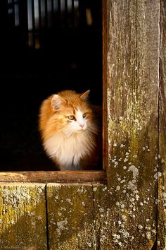 (Cat) barn door (via gypsymarestudios)