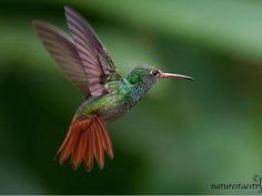 45+ Beautiful Hummingbird Photos Collection - Designore.com
