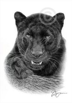 Black Panther pencil drawing art print - big cat illustration - artwork signed by artist Gary Tymon - Ltd Ed 50 prints - animal portrait Black Panther Drawing, Black Panther Tattoo, Tiger Drawing, Black Panthers, Pencil Drawings Of Animals, Art Drawings, Drawing Art, Book Drawing, Drawing Ideas