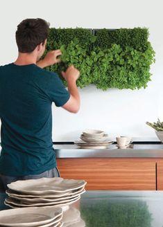 Living wall of kitchen herbs. Kitchen Herbs, Herb Garden In Kitchen, Herbs Garden, Green Kitchen, Green Garden, Container Gardening, Gardening Tips, Urban Gardening, Vertical Herb Gardens