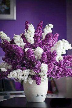 Prachtige hyacinten