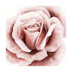 Metaverse Pink Rose Ii By Grace Popp Framed Art Home - Macy's Canvas Artwork, Framed Artwork, Canvas Wall Art, Framed Prints, Painting Prints, Art Prints, Roses Painting Acrylic, Plant Drawing, Epic Art