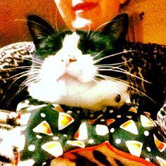 Et tu, Brute? #cat #halloween #猫 #ハロウィン