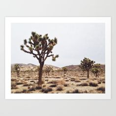 Buy Joshua Tree Art Print by Zachary Domes. Worldwide shipping available at Society6.com. Just one of millions of high quality products available.