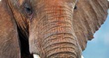 Mettre fin au commerce d'espèces sauvages