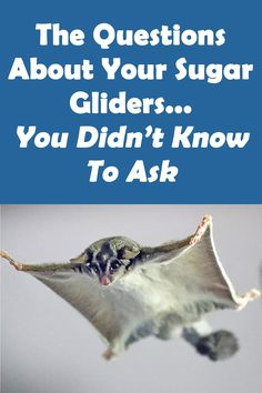 Trimming Your Sugar Glider's Nails Cute Animal Memes, Animal Jokes, Cute Funny Animals, Cute Cats, Baby Animals Pictures, Cute Animal Pictures, Animals And Pets, Unusual Animals, Animals Beautiful