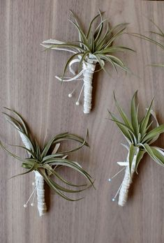 Air Plant Boutonnieres | Photo by: Thayer Allison Gowdy